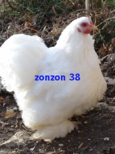 BLC1_zonzon38