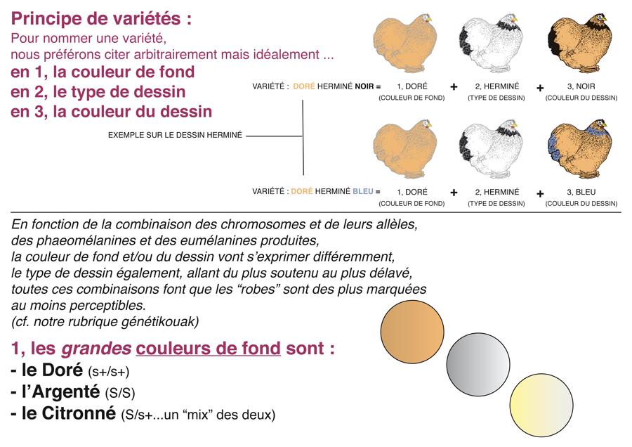 couleurs_et_varietes_1