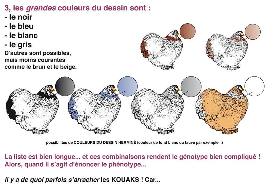couleurs_et_varietes_4