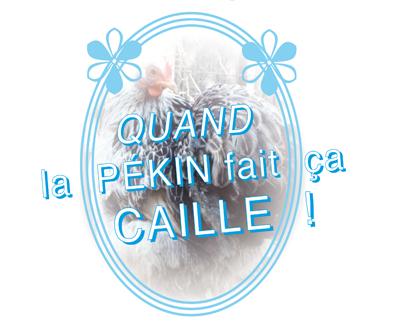 poule_pekin_caille_argenté